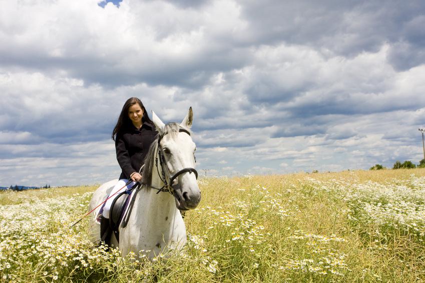 DVD gratis sull'equitazione