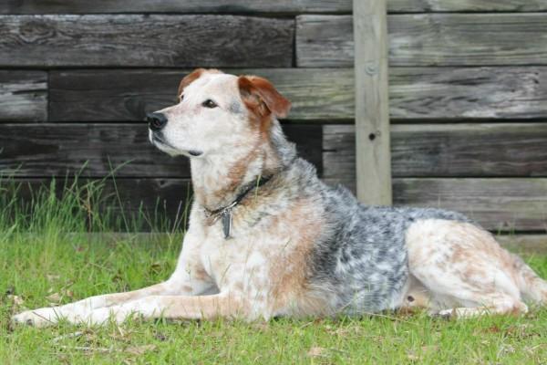 Gratis la guida al cane anziano