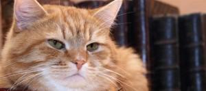 gatto anziano campionigratis.info