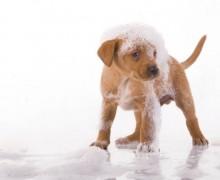 Friskies campione omaggio shampoo per cani