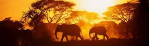 Africa rivista campionigratis.info