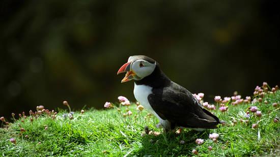 Guida turistica e cd omaggio isole Shetland