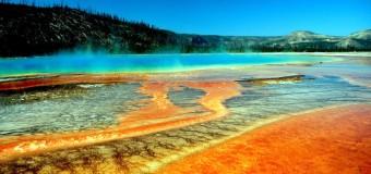 Adesivo omaggio Yellowstone