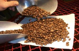 caffe grifo campionigratis.info