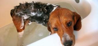 Campione omaggio shampoo per cani da Friskies