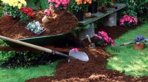 giardinaggio campionigratis.info