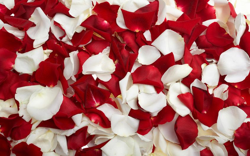 Petali di rosa in omaggio!