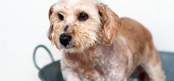 Campione omaggio shampoo per cani Purina