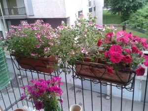 semi fiori omaggio campionigratis.info